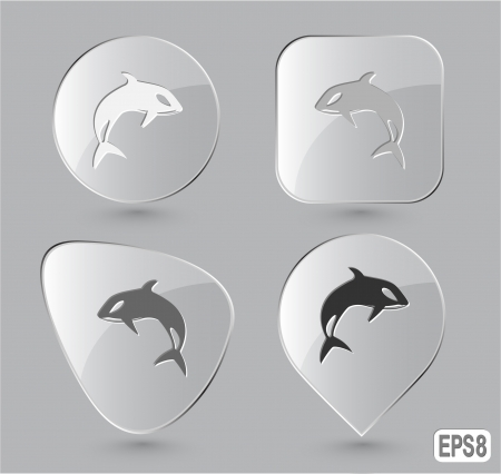 Killer whale. Glass buttons. Vector illustration. illustration