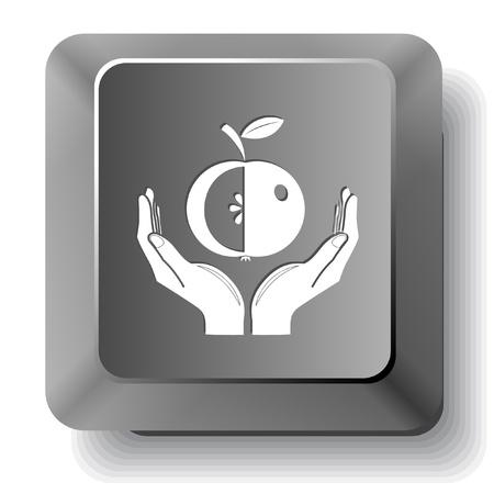 manzana en las manos. photo