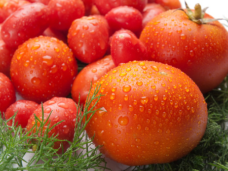 eat right: Fresh, delicious and tasty tomatoes and fennel as the example of healthy food and the right way to eat