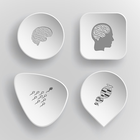 spermatozoid: 4 images: brain, human brain, spermatozoon, dna. Medical set. White concave buttons on gray background. Vector icons. Illustration