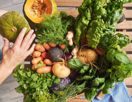 Top view of freshly harvested vegetables. Hands holding a cut pumpkin. Farm vegetables. Autumn harvest and healthy organic food concept.