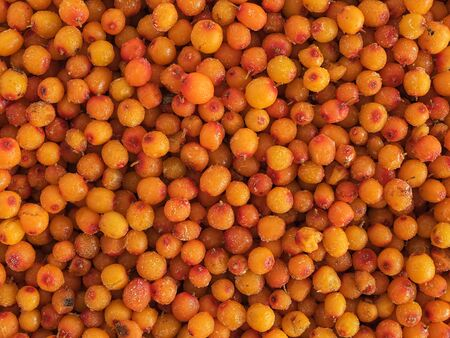 The berries of sea buckthorn. Close-up. Ingredients for Herbal Tea. Background of berries.