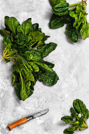 Green fresh spinach leaves on a neutral gray concrete background. An overhead view of freshly cut spinach lettuce. Healthy detoxification vegan diet concept. Banner idea Stock fotó