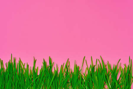 Fresh grass spread out on bright pink field, idea for banner or text, spring background Stock fotó