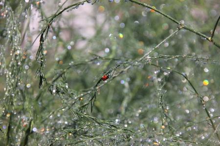 glistening: Glistening drops of rain on the branches. Stock Photo