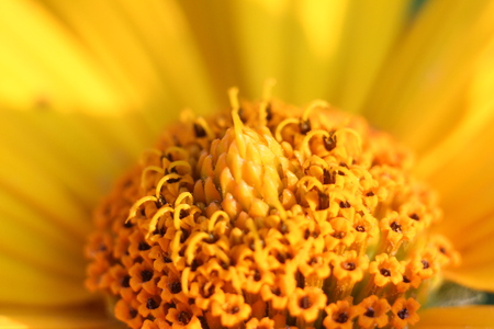 Yellow flower filled with nectar Stock Photo