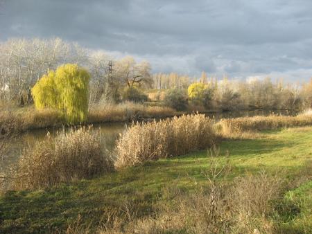Beautiful autumn landscape, dry trees, sky, seasons change, autumnal park, fall nature