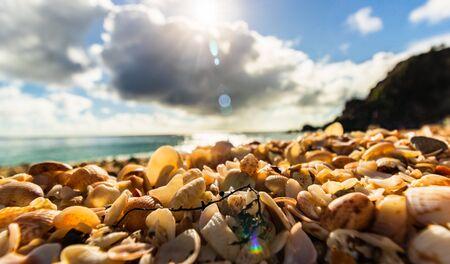 Isla de San Bartolomé (Isla de San Bartolomé), Caribe Conchas de fotografías de primer plano en la playa Shell en Gustavia, Antillas francesas, con un hermoso fondo.