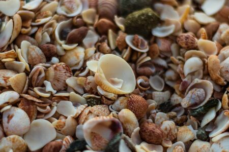 St. Barth's Island (St. Bart's Island), Caribbean Close-up photo of a lot of shells on Shell Beach in Gustavia, Caribbean, French West Indies.