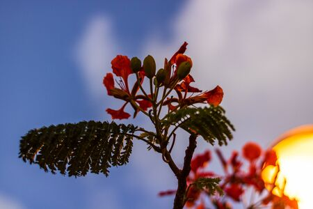 Close up of beautiful red summer flowers on a sunset sky background.