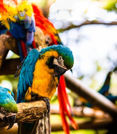 Blue and yellow macaw, parrot in a natural park in Cartagena, Colombia