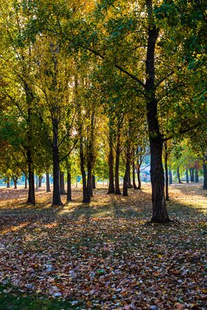 Autumn scene with golden leaves in a park in Bucharest