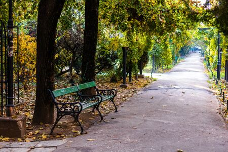Autumn scene on an alley in Cismigiu park in Bucharest with leaves on the ground Stok Fotoğraf - 130404866