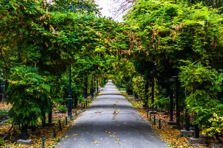 Autumn scene on an alley in Cismigiu park in Bucharest with leaves on the ground