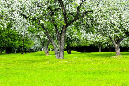 Blooming green Beautiful park garden in spring Stock Photo - 4909622