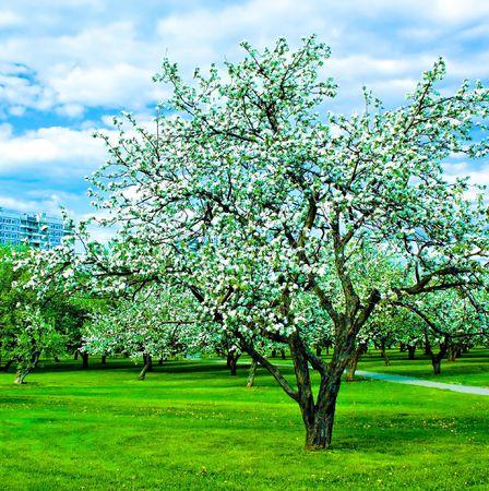 the yards: Hermoso parque verde en flor de jard�n en la primavera de