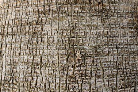 ruggedness: Palm tree close-up sfondo