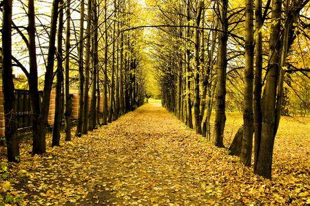 Schöne Herbst-Park Standard-Bild - 5702445