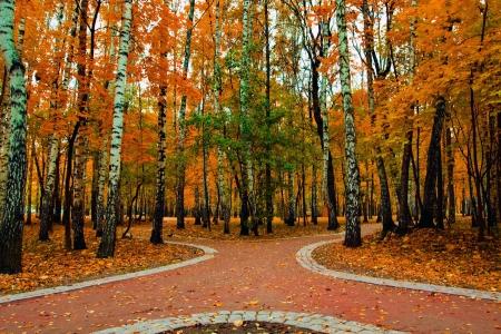 Pfad in Herbstfarben park  Standard-Bild - 5792313