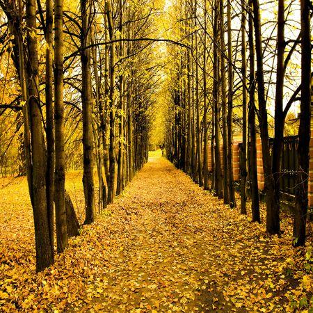 beautiful autumn park Stock Photo - 5887070