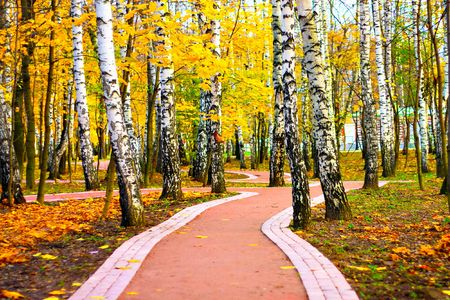 Alley in the autumn park photo