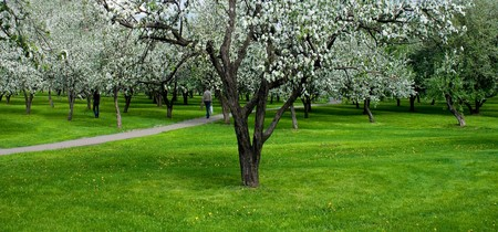 blossoms on footpath through green forest Stock Photo - 6960598