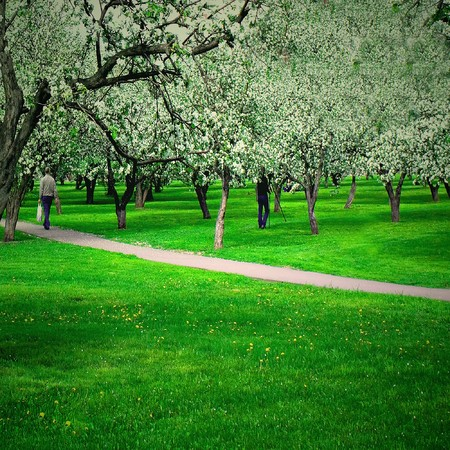 blossoms on footpath through green forest Stock Photo - 6960403