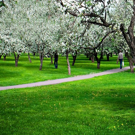 blossoms on footpath through green forest Stock Photo - 6960401