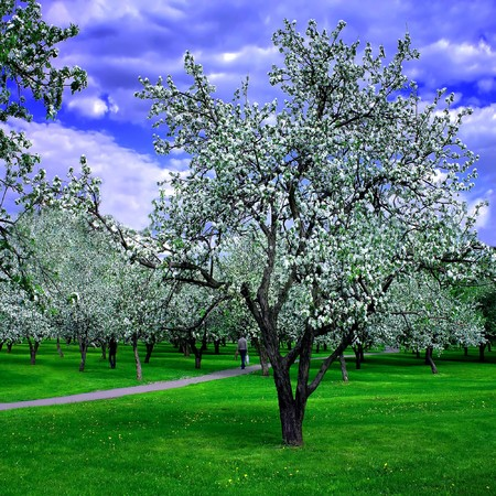 blooming spring forest Stock Photo - 6960434