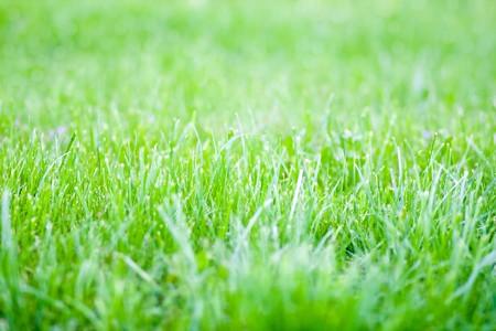 vivid spring green grass photo