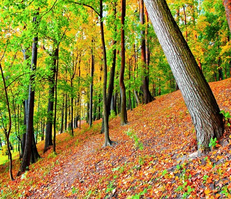 colourful forest Stock Photo