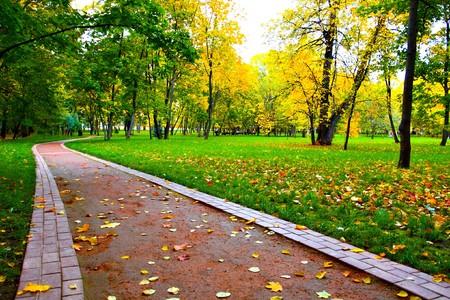autumn in the street Stock Photo - 7891928