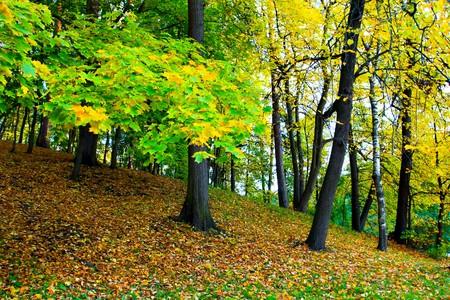 vivid park photo