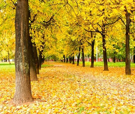 schöne Gasse in der Natur  Lizenzfreie Bilder