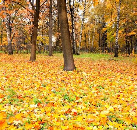 beautiful golden orchard photo