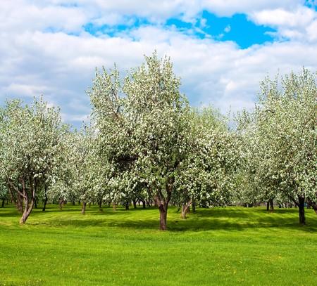 ländliche blühende Landschaft im Frühling Standard-Bild