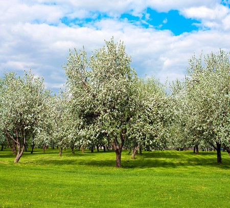 rural blossoming landscape in springtime photo
