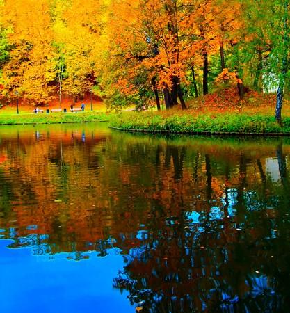 lebendige Wald in der Nähe von Fluss