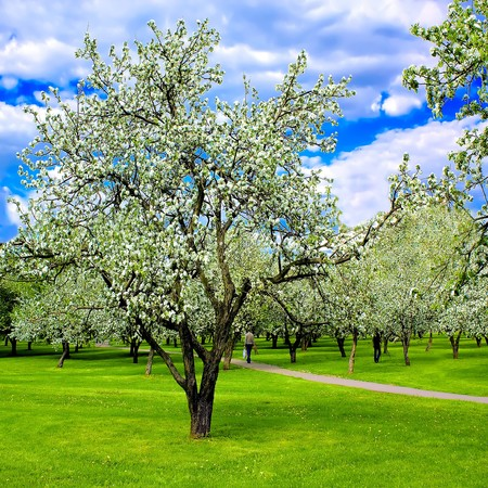 blooming spring forest Stock Photo - 8160127