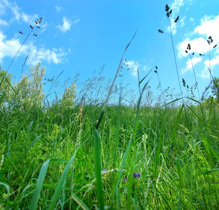lea: sunny lea in summertime