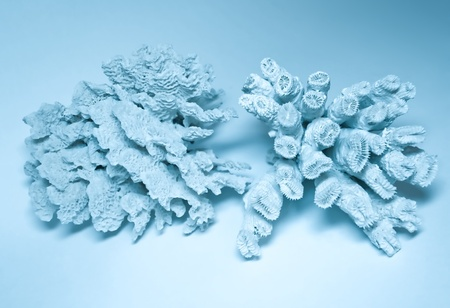 coral background Stock Photo - 10488689