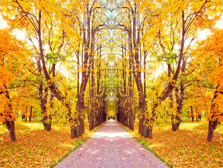 beautiful diminishing alley in autumnal golden orchard photo