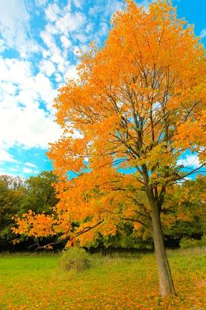 leafage: vivid autumnal leafage over blue sky