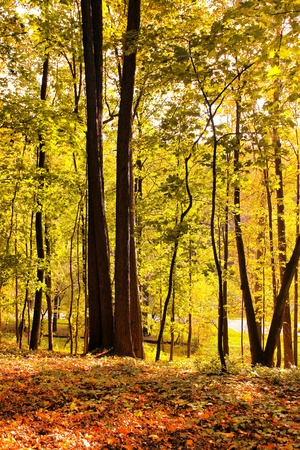 beautiful autumnal forest photo