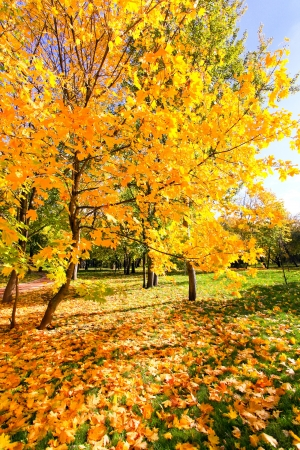 beautiful colorful autumn park in sunny day Stock Photo