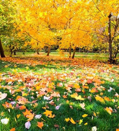 krásný barevný podzim park ve slunečný den Reklamní fotografie - 10980874