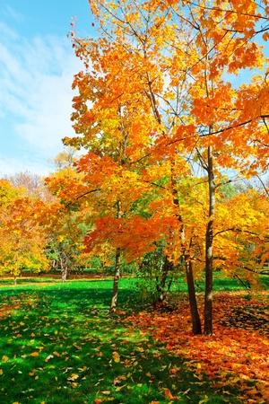 色鮮やかな紅葉の森 写真素材