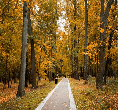 colorful autumnal forest photo