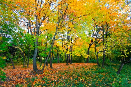 colorful autumnal forest Stock Photo - 10980836