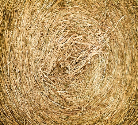 texture of dry haystack on the meadow photo